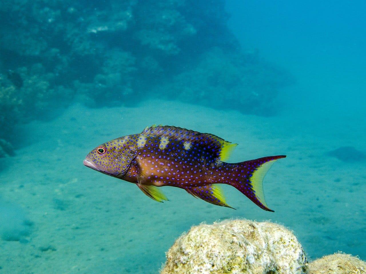 דגים באמריקה - 6 עובדות על ציקלידים אמריקאים שתראו במהלך הטיול שלכם ביבשת אמריקה